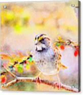 White Throated Sparrow - Digital Paint 1                                             Acrylic Print