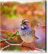 White Throated Sparrow - Digital Paint 3 Acrylic Print