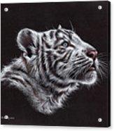 White Tiger Cub Acrylic Print