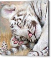 White Tiger Dreams Acrylic Print by Carol Cavalaris