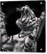 White Tiger Featured In Greece Exhibition Acrylic Print
