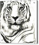White Tiger Portrait Acrylic Print