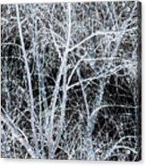 White Tree Black Night Acrylic Print