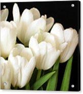 White Tulips 1 Acrylic Print