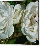 White Twin Flowers Acrylic Print