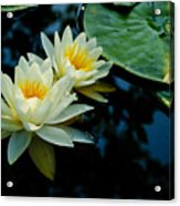 White Water Lilies Acrylic Print