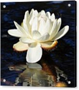 White Water Lily Acrylic Print by Andrea Everhard