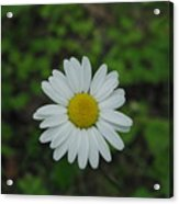 White Wild Flower  Acrylic Print