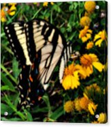 White Wing Butterfly Acrylic Print