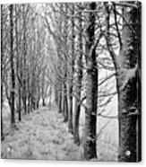 White Winter Pathway Acrylic Print