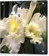 White With Yellow Orchids  Acrylic Print
