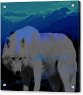 White Wolves Acrylic Print