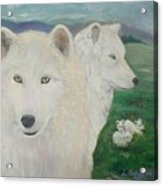 White Wolves Guarding Their Pups Acrylic Print