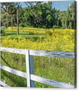 White Wood Fence And Wildflowers Acrylic Print