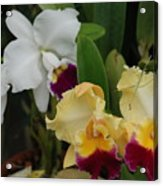 White Yellow Orchids Acrylic Print