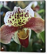 White Yellow Speckled Acrylic Print