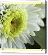 White Mum Card Acrylic Print
