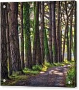 Whiteford Burrows Woods Acrylic Print
