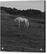 Whitehorse Acrylic Print