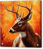 Whitetail Buck Portrait Acrylic Print