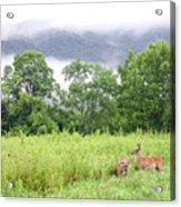 Whitetail Deer 1 Acrylic Print