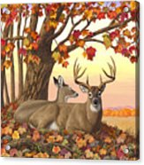 Whitetail Deer - Hilltop Retreat Acrylic Print by Crista Forest