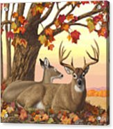 Whitetail Deer - Hilltop Retreat Horizontal Acrylic Print by Crista Forest
