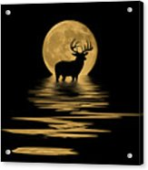 Whitetail Deer In The Moonlight Acrylic Print