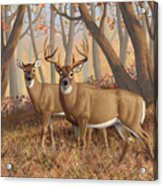 Whitetail Deer Painting - Fall Flame Acrylic Print by Crista Forest