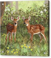Whitetail Deer Twin Fawns Acrylic Print by Crista Forest