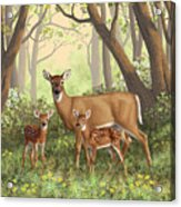 Whitetail Doe And Fawns - Mom's Little Spring Blossoms Acrylic Print by Crista Forest