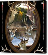 Whitetail Dreams Acrylic Print by Shane Bechler