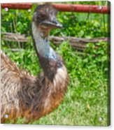 Who Are You? Acrylic Print