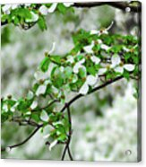 Who Doesnt Love The Spring Acrylic Print