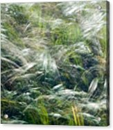 Who Has Seen The Wind Acrylic Print
