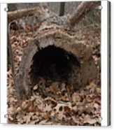Our Hollowed Home Acrylic Print