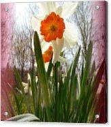 Who Planted Those Flowers Acrylic Print