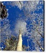 Who Shook The Tree Acrylic Print
