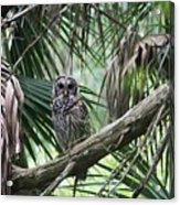 Whoooo Are You Acrylic Print by April Wietrecki Green