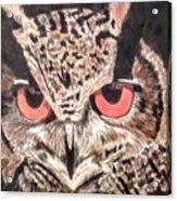 Whoot Owl Acrylic Print