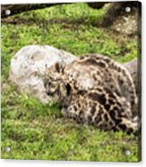 Who's The Boss Here? Acrylic Print