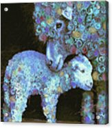 Whose Little Lamb Are You? Acrylic Print