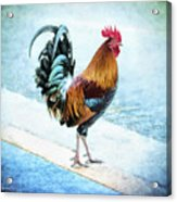 Why Did The Chicken... Acrylic Print