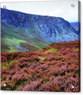 Wicklow Heather Carpet Acrylic Print