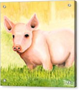 Wilber Acrylic Print
