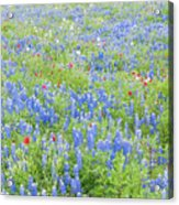 Wild About Wildflowers Of Texas. Acrylic Print