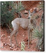 Wild And Pretty - Garden Of The Gods Colorado Springs Acrylic Print