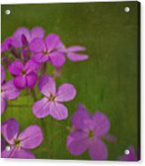 Wild And Wonderful Acrylic Print