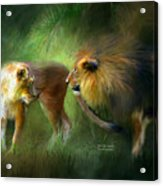 Wild Attraction Acrylic Print