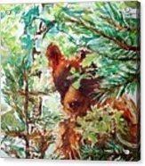 Wild Bear Peek-a-boo Watercolour Acrylic Print
